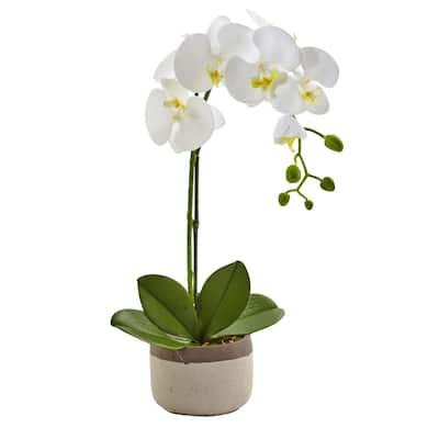 19 in. Phalaenopsis Orchid in Ceramic Pot
