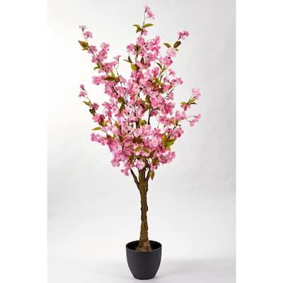 51 in. Cherry Tree in-Pot