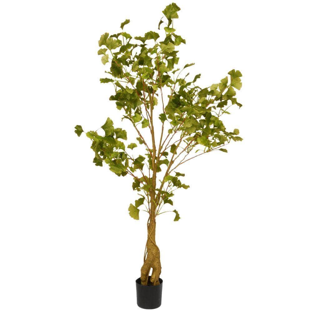 2 Ginkgo Trees Ginkgo Biloba 4 container