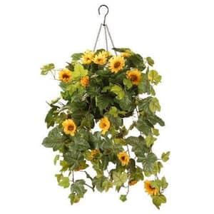 11 in. Sunflower Hanging Basket