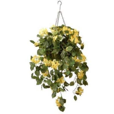 14 in. Bougainvillea Plant Hanging Basket