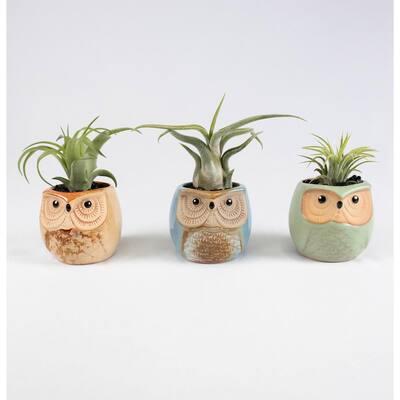 Air Plant Trio (Tillandsias) - Live Plants in 2.3 in. Brown, Tan Color Ceramic Owls Pot Set w/ White Stone (3-Pack)