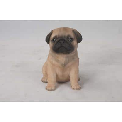 Pug Puppy Seated