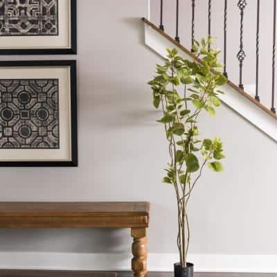 5 ft. Cotinus Coggygria Tree with Pot-Green