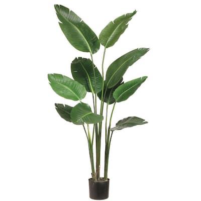 5 ft. Bird of Paradise Plant in Plastic Pot