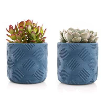 4 in. Assorted Succulent Set in Blue Weave Pot (2-Pack)