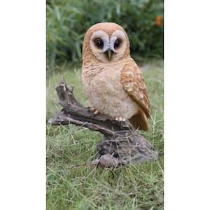 Tawny Owl On Stump