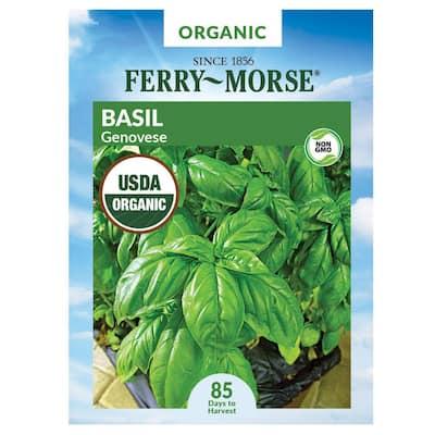 Basil Genovese Organic Herb Seed