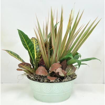 8 in Exotic Angel Garden Plants in Upgrade Pot