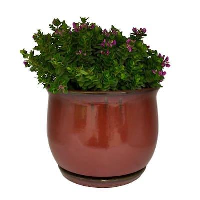 14 in. Dia Oxblood Red Bella Ceramic Planter