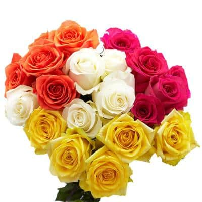 50 Stems of Assorted Roses - 2 Different Colors- Fresh Flowers for Delivery
