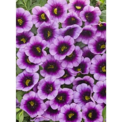 4-Pack, 4.25 in. Grande Superbells Blue Moon Punch (Calibrachoa) Live Plant Purple and Yellow Flowers