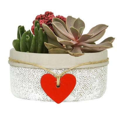 Heart 6.5 in. Whitewash Concrete Bowl Planter