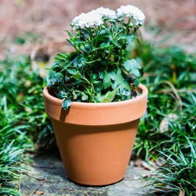 2 in. Mini Terra Cotta Pot