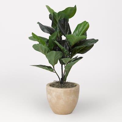 Fiddle Leaf Fig Plant in Round Tan Planter