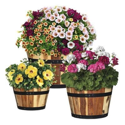 Acacia Wood Barrel Planters (Set of 3)