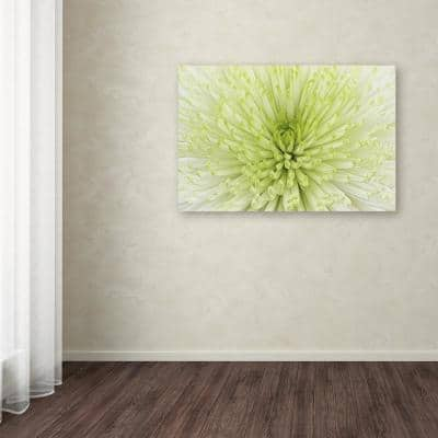 """30 in. x 47 in. """"Lime Light Spider Mum"""" by Cora Niele Printed Canvas Wall Art"""