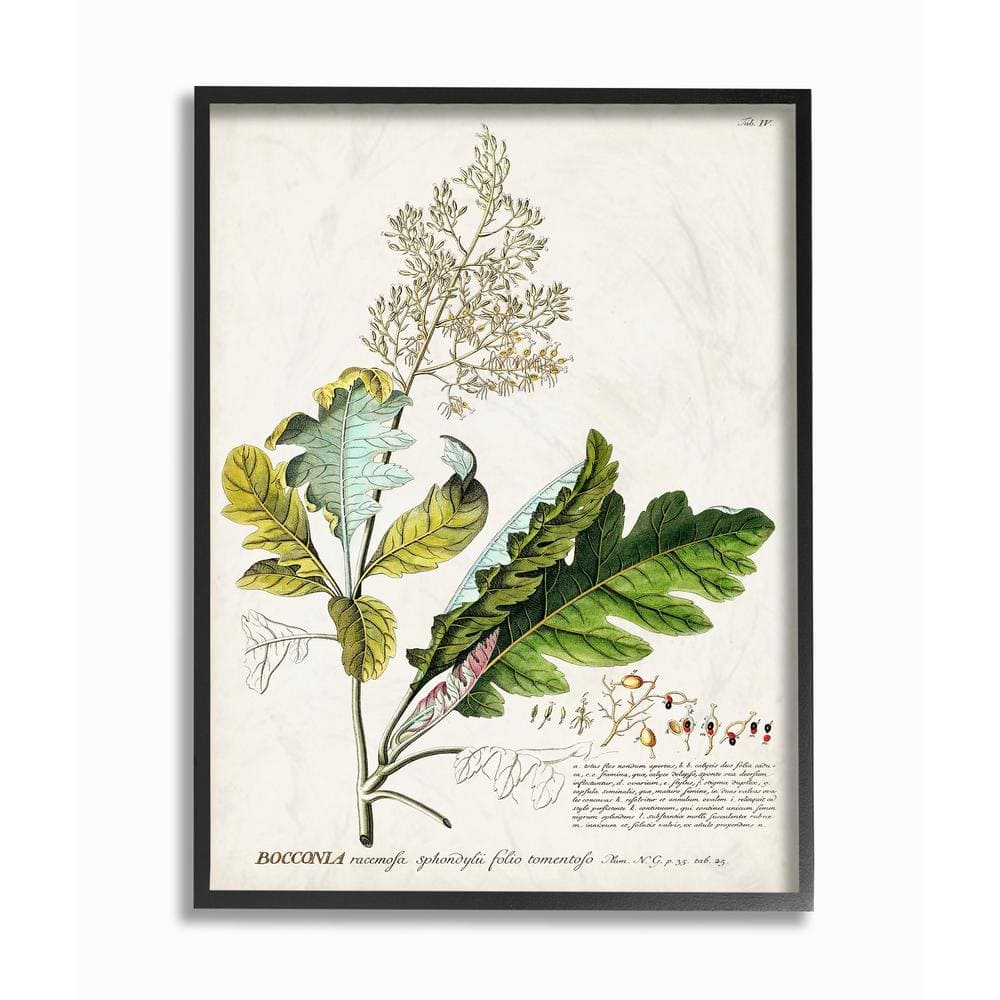 Stupell Industries Botanical Plant Illustration Leaves Vintage Design By Unknown Framed Abstract Wall Art 16 In X 20 In Fap 211 Fr 16x20 The Home Depot
