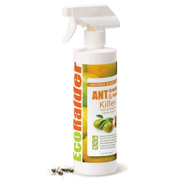 Ecoraider 16 Oz Natural And Non Toxic Spray Ant And Crawling Insect Killer Eh1rm50016 The Home Depot