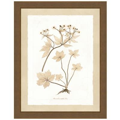 """Delicate Botany Herbarium IV"" Framed Archival Paper Wall Art (24 in. x 28 in. in full size)"