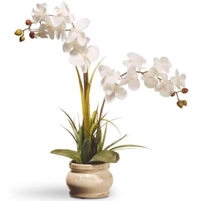 24 in. Cream Colored Orchid in Ceramic Pot