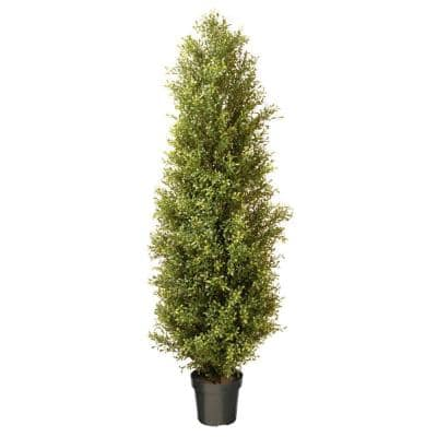72 in. Argentea Plant with Round Green Growers Pot