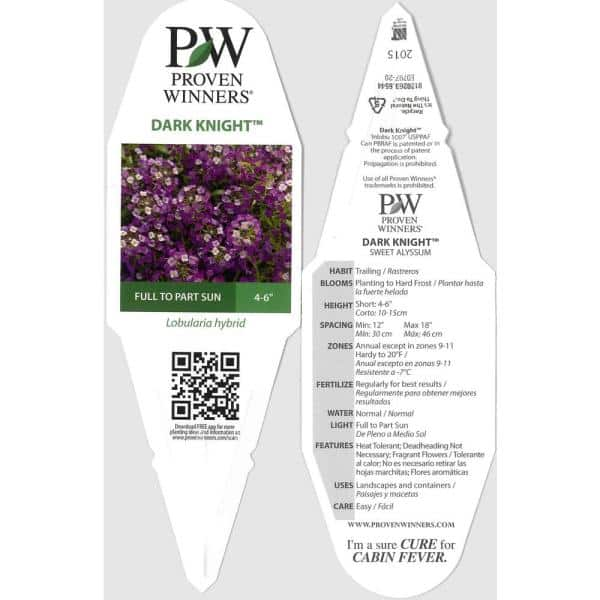 Proven Winners 4 Pack 4 25 In Grande Dark Knight Sweet Alyssum Lobularia Live Plant Purple Flowers Lblprw1057524 The Home Depot