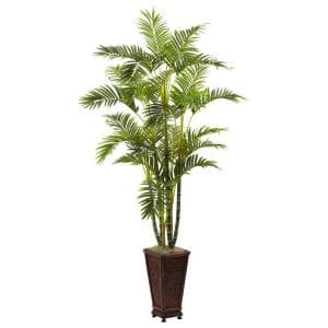 6.5 ft. Areca with Decorative planter