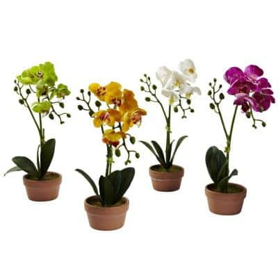 Phalaenopsis Orchid with Clay Vase (Set of 4)