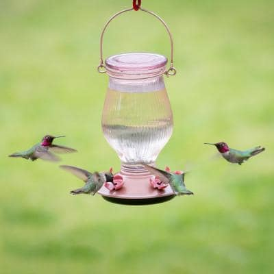 Rose Gold Top-Fill Decorative Glass Hummingbird Feeder - 24 oz. Capacity