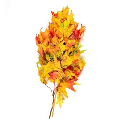 Oak Leaves Harvest Dried Natural (2-Pack)