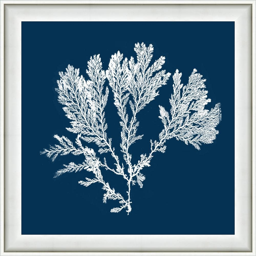 Melissa Van Hise 18 In X 18 In Navy Coral I Framed Giclee Print Wall Art Hdip14021 The Home Depot