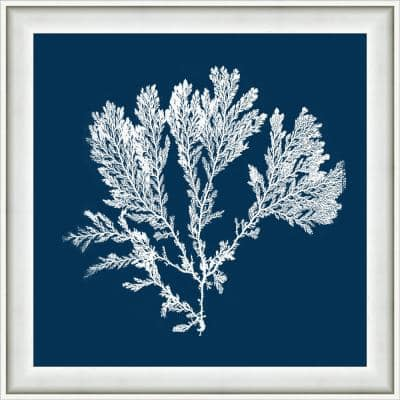 """18 in. x 18 in. """"Navy Coral I"""" Framed Giclee Print Wall Art"""
