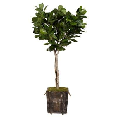 Indoor 7 ft. Fiddle Leaf Fig Tree in Rustic Wooden Planter