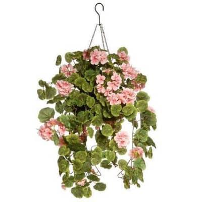 11 in. Geranium Hanging Basket