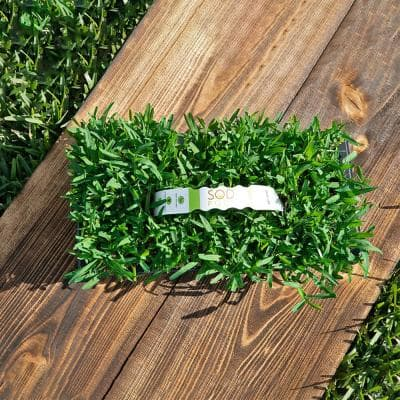 St Augustine Seville Grass Plugs (32-Count) Natural, Affordable Lawn Improvement