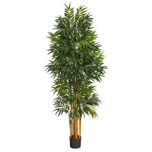 5.5 ft. Phoenix Artificial Palm tree with Natural Trunk