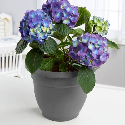 Ariana 6.5 in. Charcoal Grey Plastic Self-Watering Planter