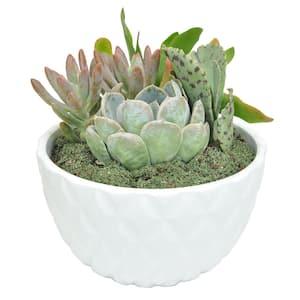 6 in. White Ceramic Cacti and Succulent Garden