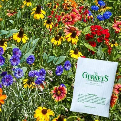Desert Climate Wildflower Seed Mixture (Approximately 300 Seed Packet)