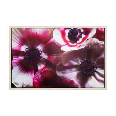 Anemone II' 38 in. W x 25 in. H Framed Photo by Veronica Olson Printed on Canvas