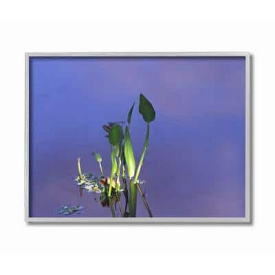 """16 in. x 20 in. """"Plant Emerging From Water Green Blue Photograph"""" by David Stern Framed Wall Art"""