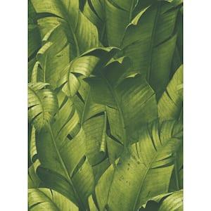 Tropical Banana Leaves Green Botanical Vinyl Peel & Stick Wallpaper Roll (Covers 30.75 Sq. Ft.)