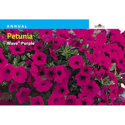 Petunia Wave Purple Seed