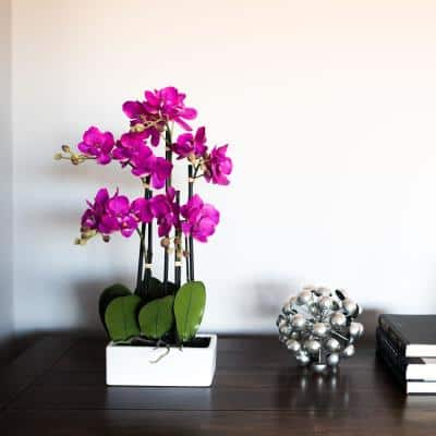21 in. Purple Potted Orchid