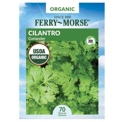 Cilantro Coriander Organic Herb Seed