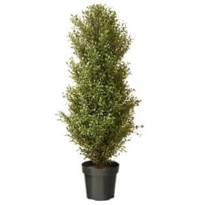 48 in. Argentea Plant with Round Green Growers Pot