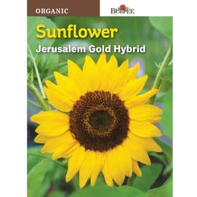 Sunflower Jerusalem Gold Hybrid Seed