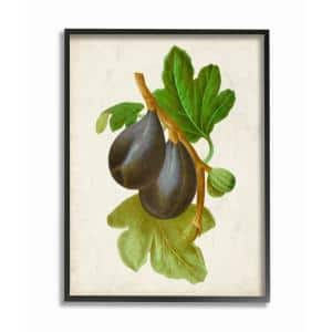 Stupell Industries 16 In X 20 In Vintage Fruit Fig Painting By Vision Studio Framed Wall Art Ccp 388 Fr 16x20 The Home Depot