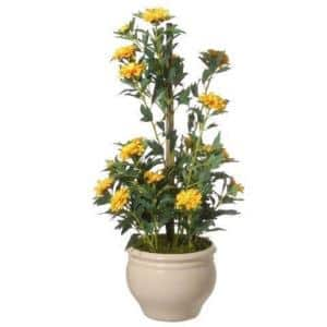 20 in. Potted Zinnia Flowers